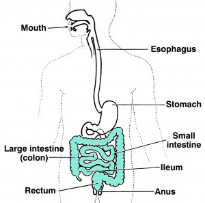 spinal cord injury bowel digestive system