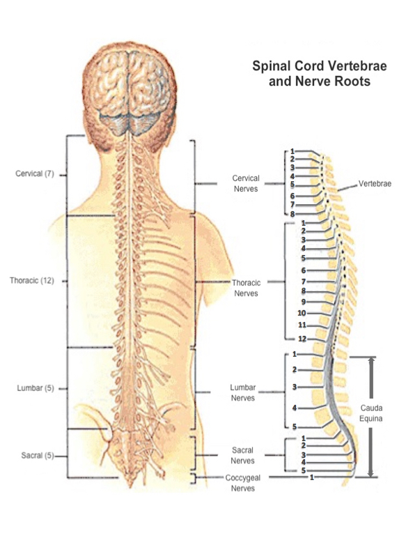 Understanding Sci Living With Spinal Cord Injury