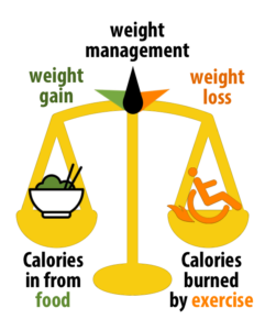 nutrition spinal cord injury energy balance